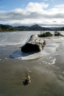 A large log washed up on the inlet edge